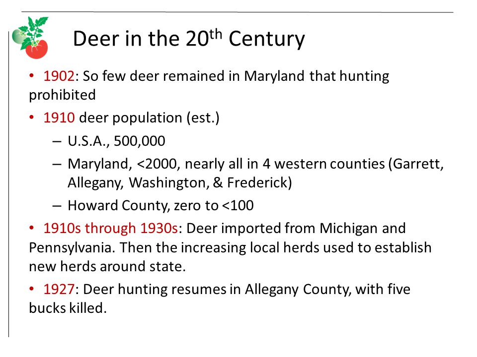 Deer in the 20 th Century 1902: So few deer remained in Maryland that hunting prohibited 1910 deer population (est.) – U.S.A., 500,000 – Maryland, <2000, nearly all in 4 western counties (Garrett, Allegany, Washington, & Frederick) – Howard County, zero to <100 1910s through 1930s: Deer imported from Michigan and Pennsylvania.