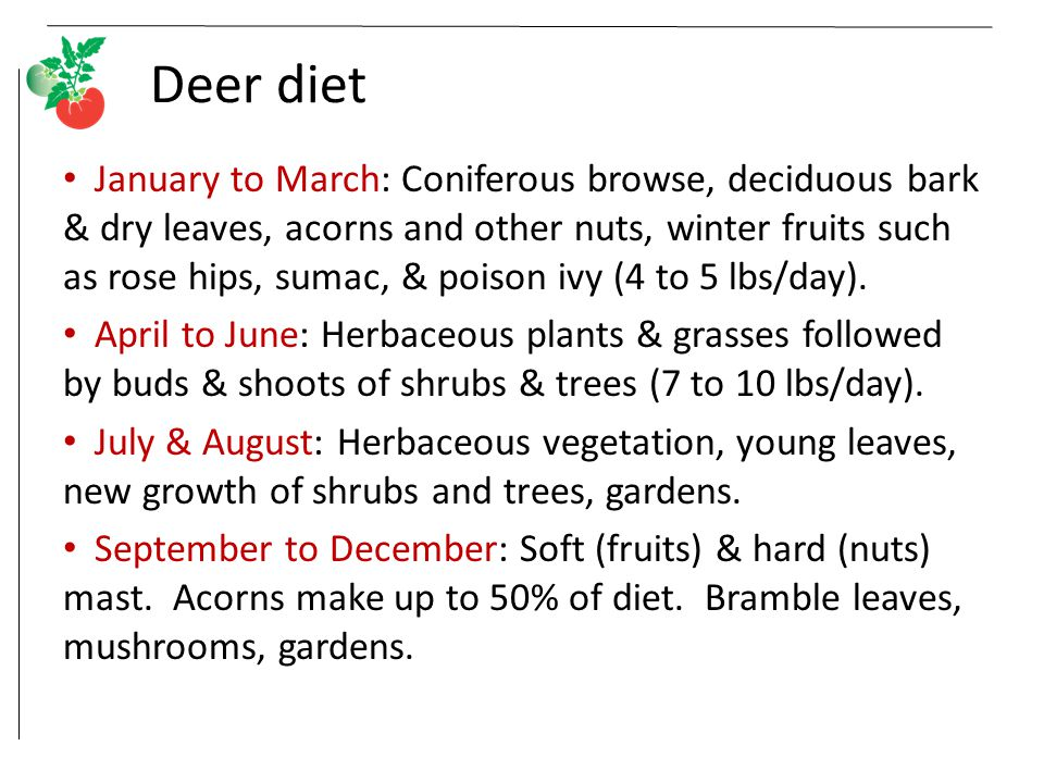 Deer diet January to March: Coniferous browse, deciduous bark & dry leaves, acorns and other nuts, winter fruits such as rose hips, sumac, & poison ivy (4 to 5 lbs/day).
