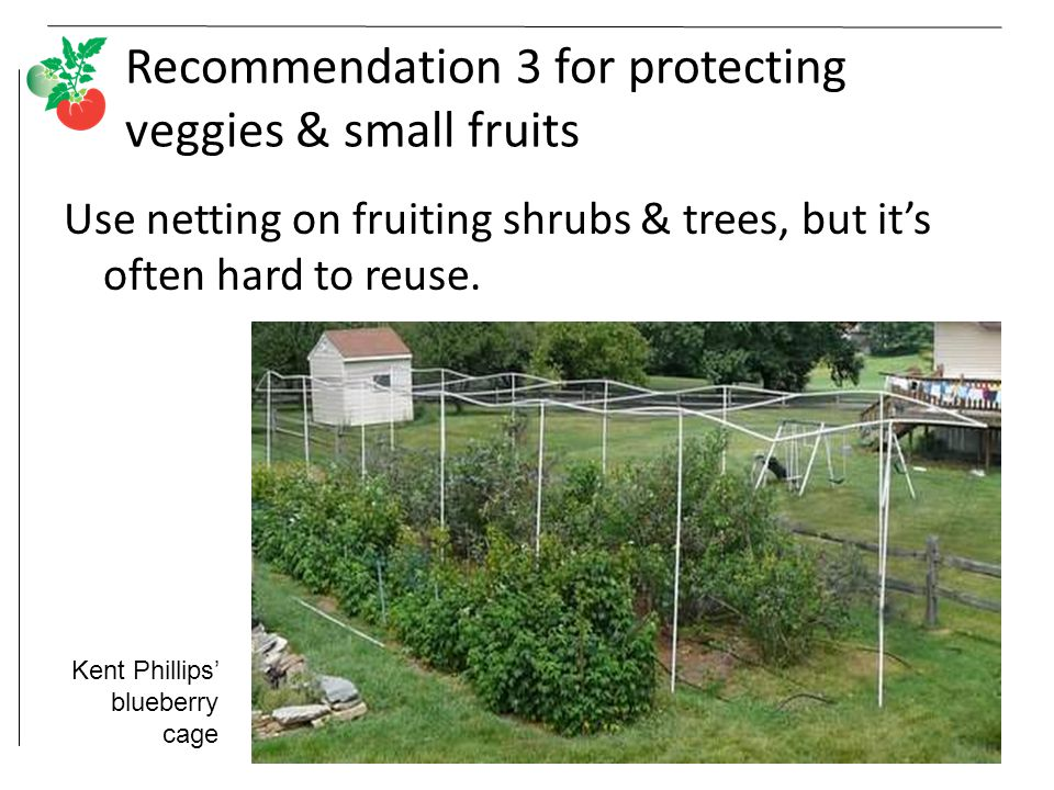 Recommendation 3 for protecting veggies & small fruits Use netting on fruiting shrubs & trees, but it's often hard to reuse.