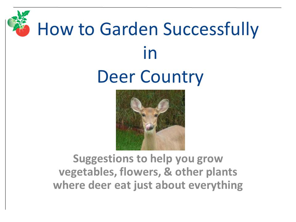 How to Garden Successfully in Deer Country Suggestions to help you grow vegetables, flowers, & other plants where deer eat just about everything