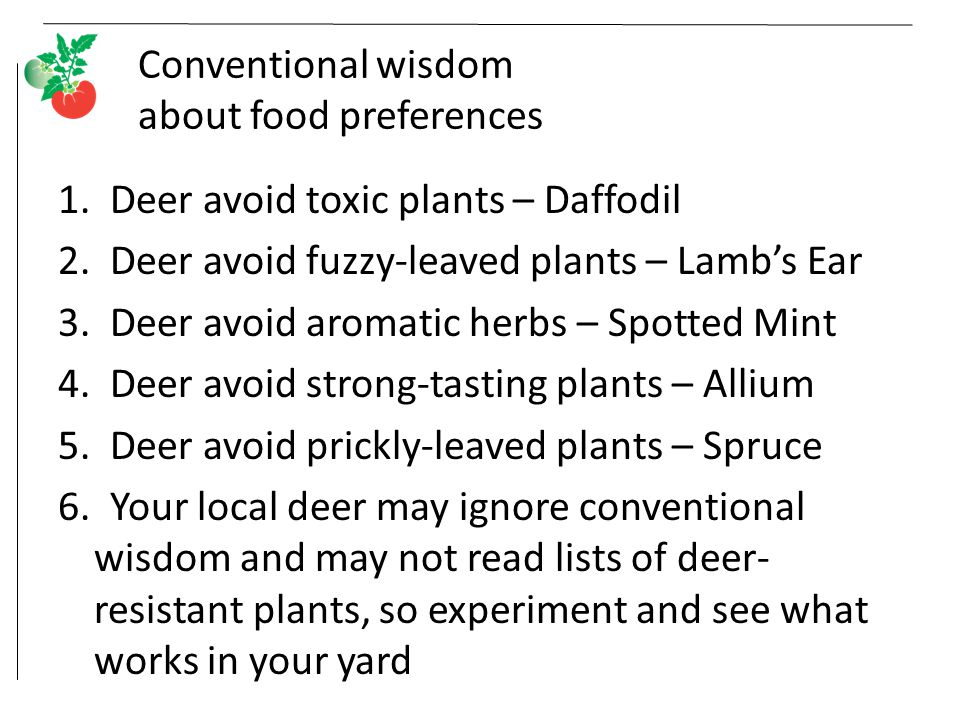 Conventional wisdom about food preferences 1. Deer avoid toxic plants – Daffodil 2.