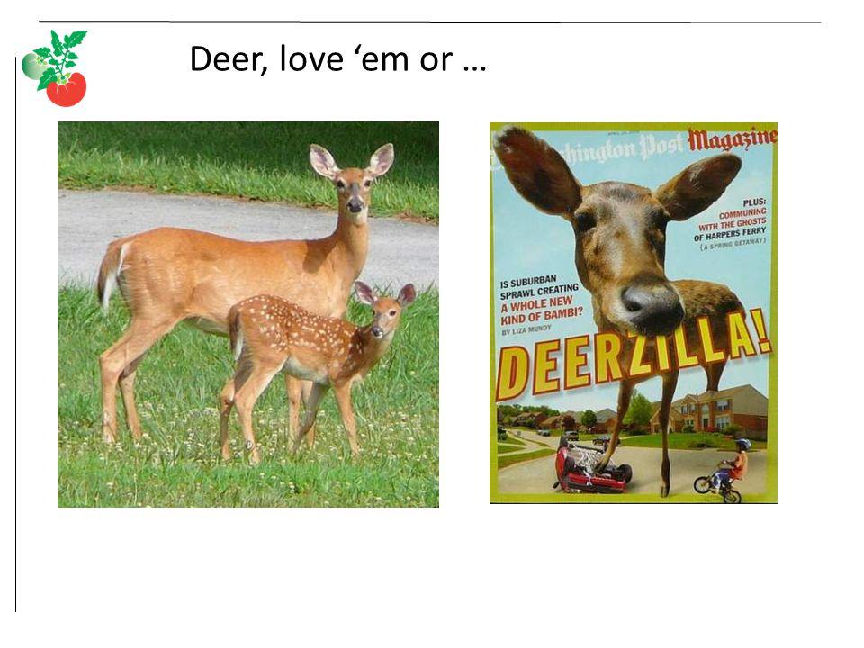 Deer, love 'em or …