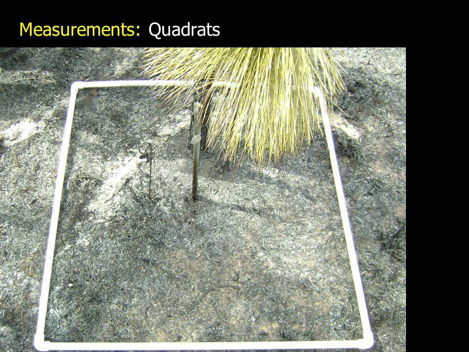 Measurements: Quadrats