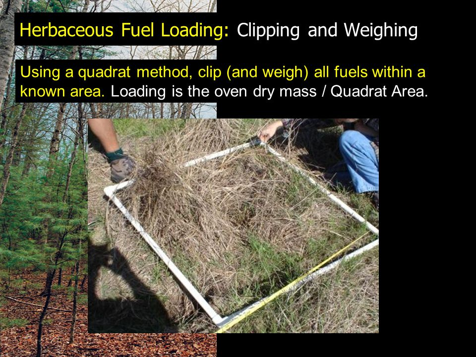 Herbaceous Fuel Loading: Clipping and Weighing Using a quadrat method, clip (and weigh) all fuels within a known area.