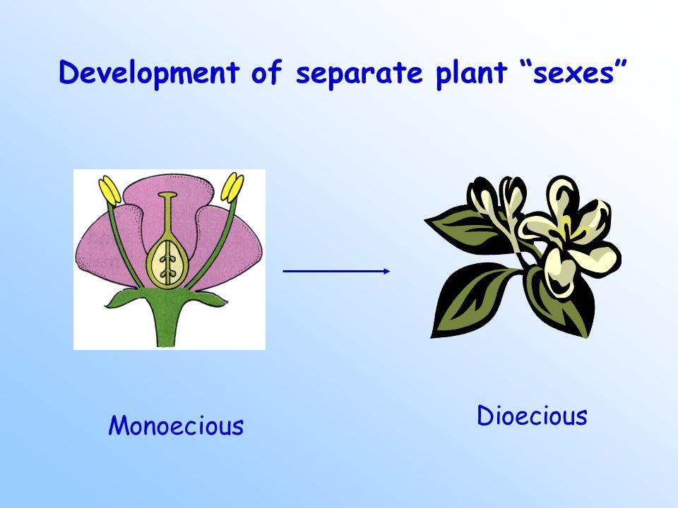 Development of separate plant sexes Monoecious Dioecious