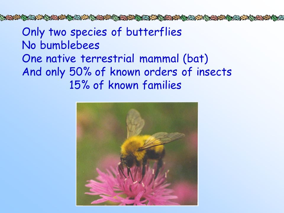 Only two species of butterflies No bumblebees One native terrestrial mammal (bat) And only 50% of known orders of insects 15% of known families