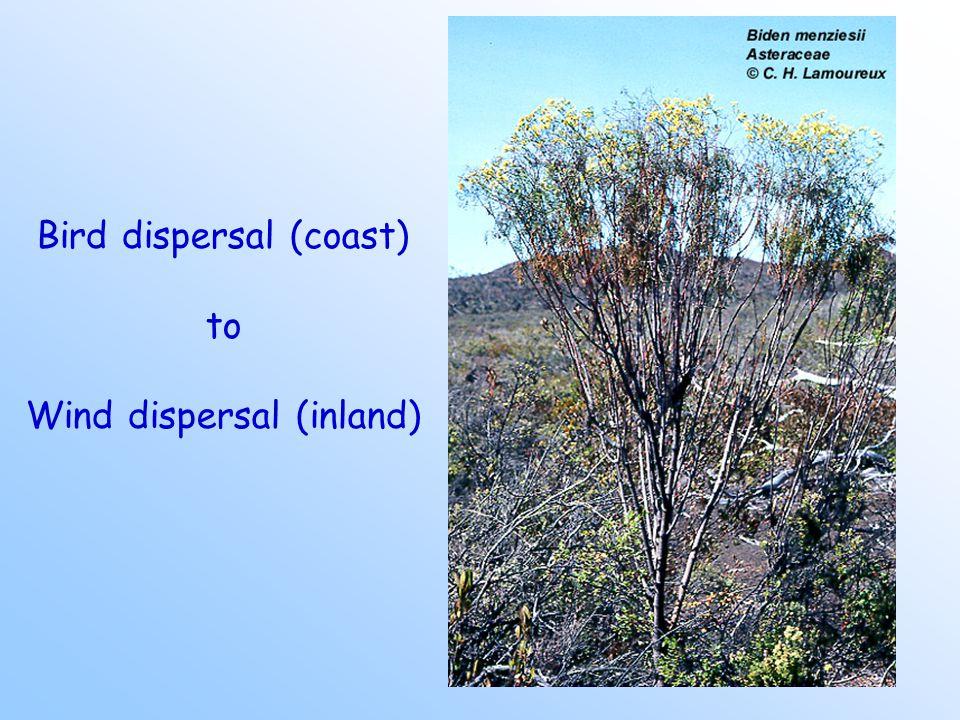 Bird dispersal (coast) to Wind dispersal (inland)