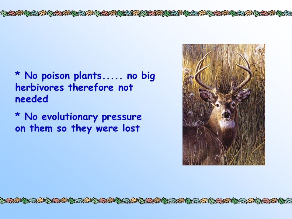 * No poison plants.....