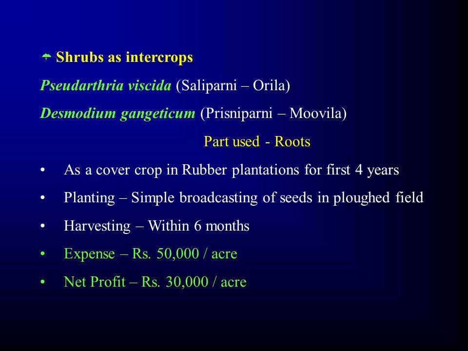  Shrubs as intercrops Pseudarthria viscida (Saliparni – Orila) Desmodium gangeticum (Prisniparni – Moovila) Part used - Roots As a cover crop in Rubb