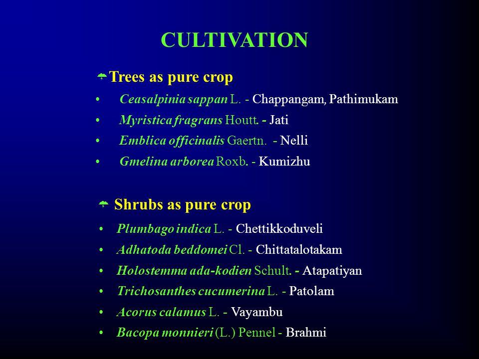  Trees as pure crop Ceasalpinia sappan L. - Chappangam, Pathimukam Myristica fragrans Houtt.