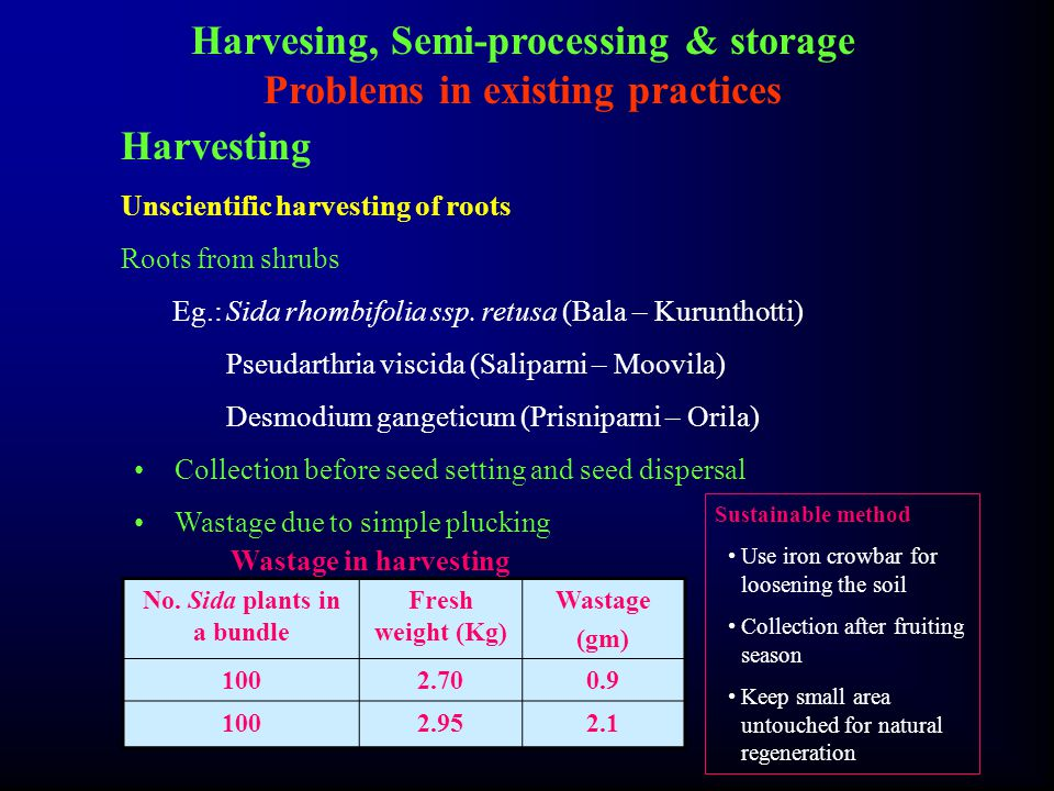 Harvesing, Semi-processing & storage Problems in existing practices Harvesting Unscientific harvesting of roots Roots from shrubs Eg.:Sida rhombifolia