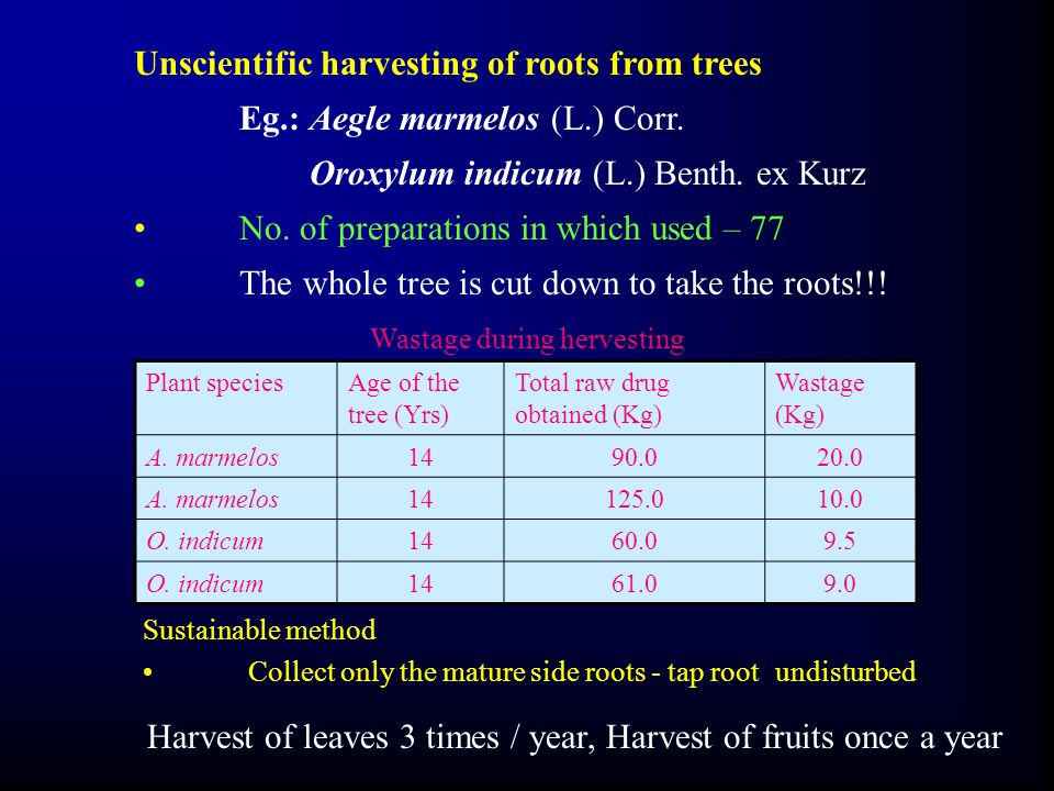 Unscientific harvesting of roots from trees Eg.: Aegle marmelos (L.) Corr.