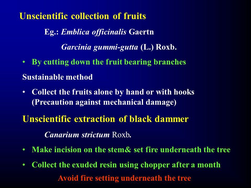 Unscientific collection of fruits Eg.: Emblica officinalis Gaertn Garcinia gummi-gutta (L.) Roxb.