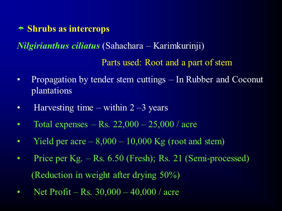  Shrubs as intercrops Nilgirianthus ciliatus (Sahachara – Karimkurinji) Parts used: Root and a part of stem Propagation by tender stem cuttings – In Rubber and Coconut plantations Harvesting time – within 2 –3 years Total expenses – Rs.