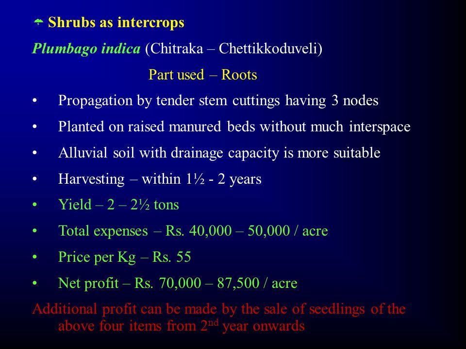  Shrubs as intercrops Plumbago indica (Chitraka – Chettikkoduveli) Part used – Roots Propagation by tender stem cuttings having 3 nodes Planted on ra