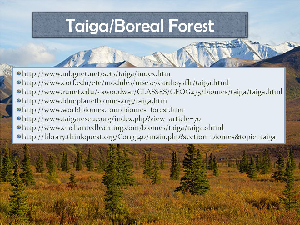 Taiga/Boreal Forest http://www.mbgnet.net/sets/taiga/index.htm http://www.cotf.edu/ete/modules/msese/earthsysflr/taiga.html http://www.runet.edu/~swoodwar/CLASSES/GEOG235/biomes/taiga/taiga.html http://www.blueplanetbiomes.org/taiga.htm http://www.worldbiomes.com/biomes_forest.htm http://www.taigarescue.org/index.php view_article=70 http://www.enchantedlearning.com/biomes/taiga/taiga.shtml http://library.thinkquest.org/C0113340/main.php section=biomes&topic=taiga