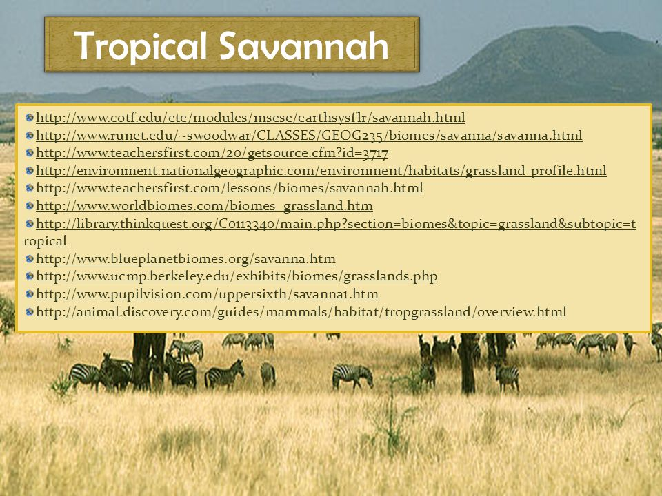 Tropical Savannah http://www.cotf.edu/ete/modules/msese/earthsysflr/savannah.html http://www.runet.edu/~swoodwar/CLASSES/GEOG235/biomes/savanna/savanna.html http://www.teachersfirst.com/20/getsource.cfm id=3717 http://environment.nationalgeographic.com/environment/habitats/grassland-profile.html http://www.teachersfirst.com/lessons/biomes/savannah.html http://www.worldbiomes.com/biomes_grassland.htm http://library.thinkquest.org/C0113340/main.php section=biomes&topic=grassland&subtopic=t ropical http://www.blueplanetbiomes.org/savanna.htm http://www.ucmp.berkeley.edu/exhibits/biomes/grasslands.php http://www.pupilvision.com/uppersixth/savanna1.htm http://animal.discovery.com/guides/mammals/habitat/tropgrassland/overview.html