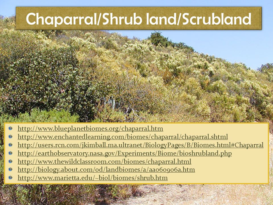 Chaparral/Shrub land/Scrubland http://www.blueplanetbiomes.org/chaparral.htm http://www.enchantedlearning.com/biomes/chaparral/chaparral.shtml http://users.rcn.com/jkimball.ma.ultranet/BiologyPages/B/Biomes.html#Chaparral http://earthobservatory.nasa.gov/Experiments/Biome/bioshrubland.php http://www.thewildclassroom.com/biomes/chaparral.html http://biology.about.com/od/landbiomes/a/aa060906a.htm http://www.marietta.edu/~biol/biomes/shrub.htm