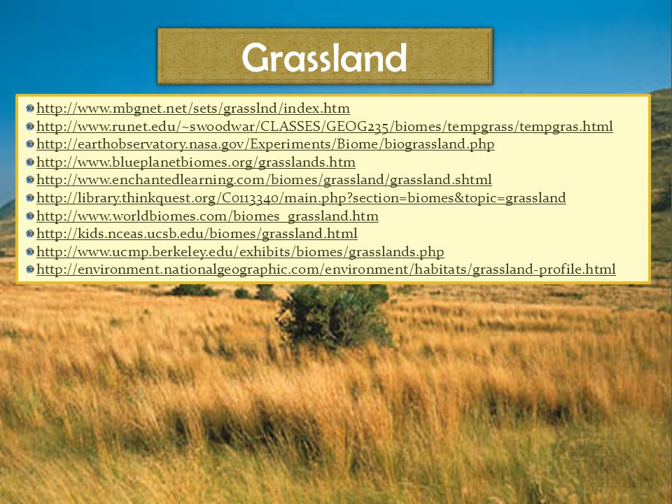 Grassland http://www.mbgnet.net/sets/grasslnd/index.htm http://www.runet.edu/~swoodwar/CLASSES/GEOG235/biomes/tempgrass/tempgras.html http://earthobservatory.nasa.gov/Experiments/Biome/biograssland.php http://www.blueplanetbiomes.org/grasslands.htm http://www.enchantedlearning.com/biomes/grassland/grassland.shtml http://library.thinkquest.org/C0113340/main.php section=biomes&topic=grassland http://www.worldbiomes.com/biomes_grassland.htm http://kids.nceas.ucsb.edu/biomes/grassland.html http://www.ucmp.berkeley.edu/exhibits/biomes/grasslands.php http://environment.nationalgeographic.com/environment/habitats/grassland-profile.html