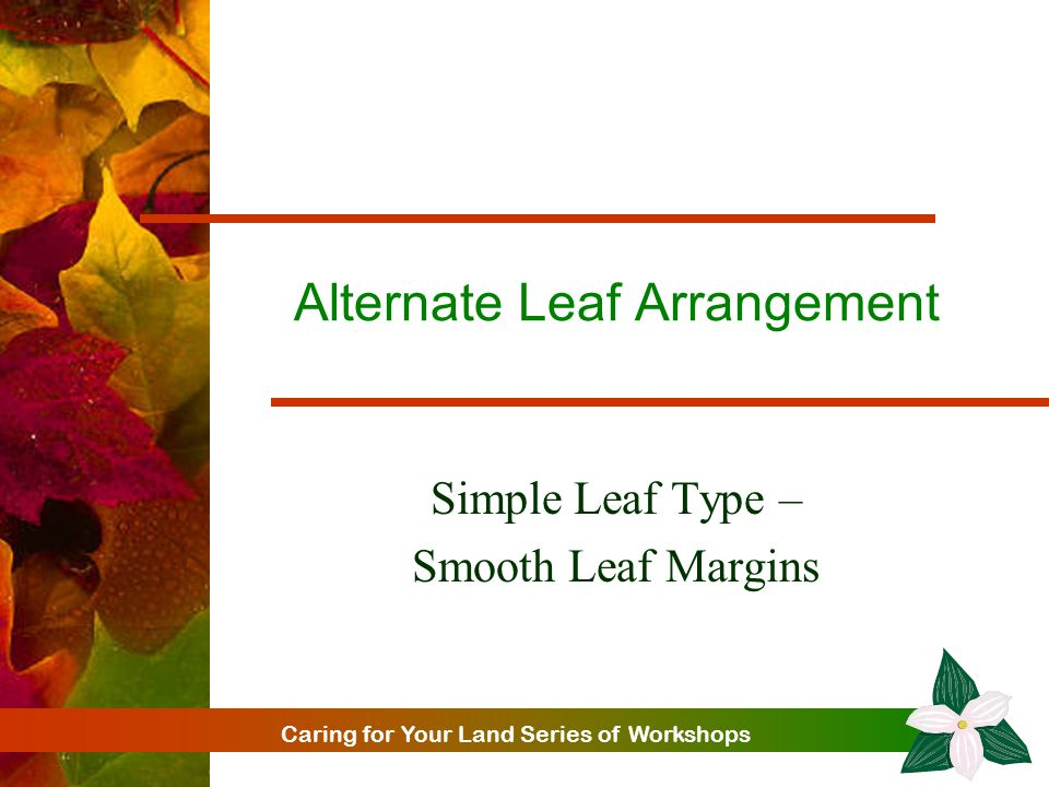 Caring for Your Land Series of Workshops Alternate Leaf Arrangement Simple Leaf Type – Smooth Leaf Margins