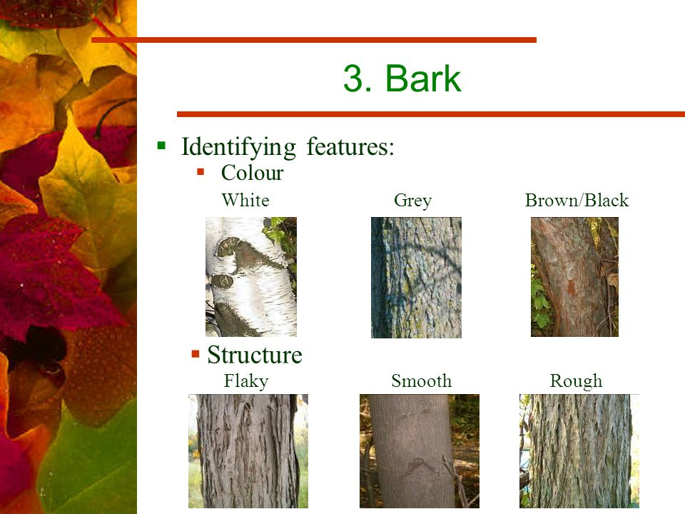 3. Bark  Identifying features: White Grey Brown/Black Flaky Smooth Rough  Colour  Structure