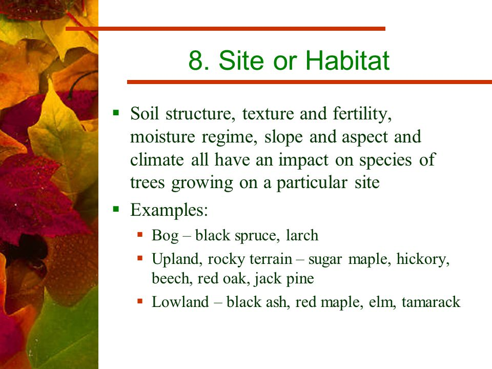 8. Site or Habitat  Soil structure, texture and fertility, moisture regime, slope and aspect and climate all have an impact on species of trees growi