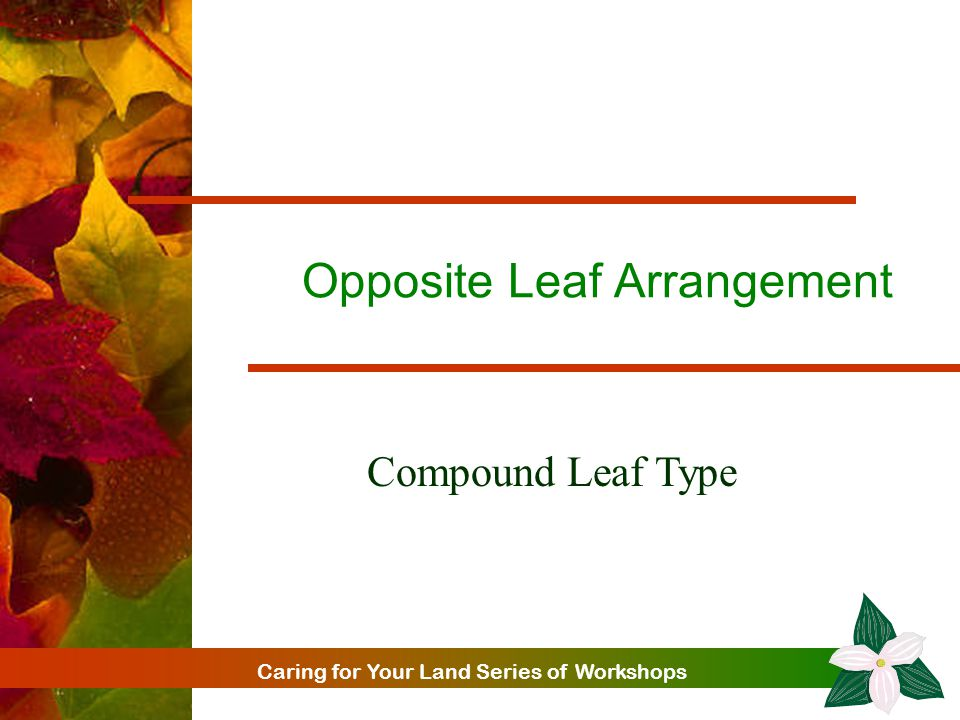 Caring for Your Land Series of Workshops Opposite Leaf Arrangement Compound Leaf Type