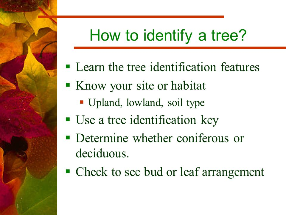 How to identify a tree.