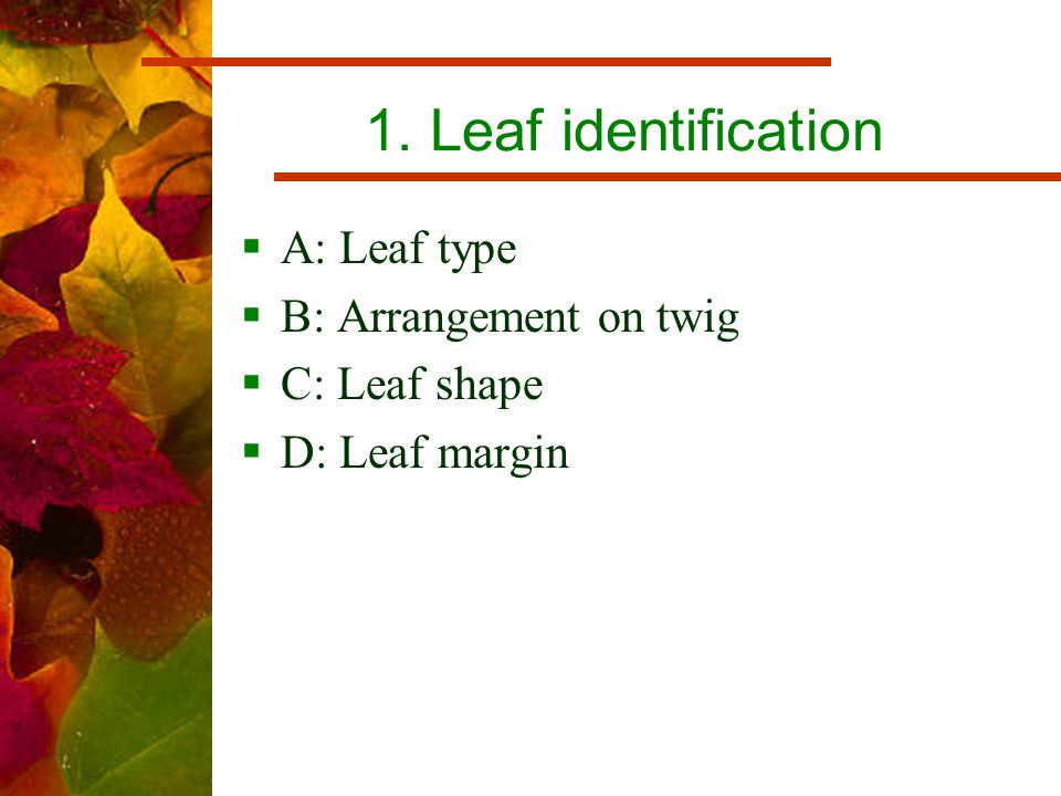 1. Leaf identification  A: Leaf type  B: Arrangement on twig  C: Leaf shape  D: Leaf margin