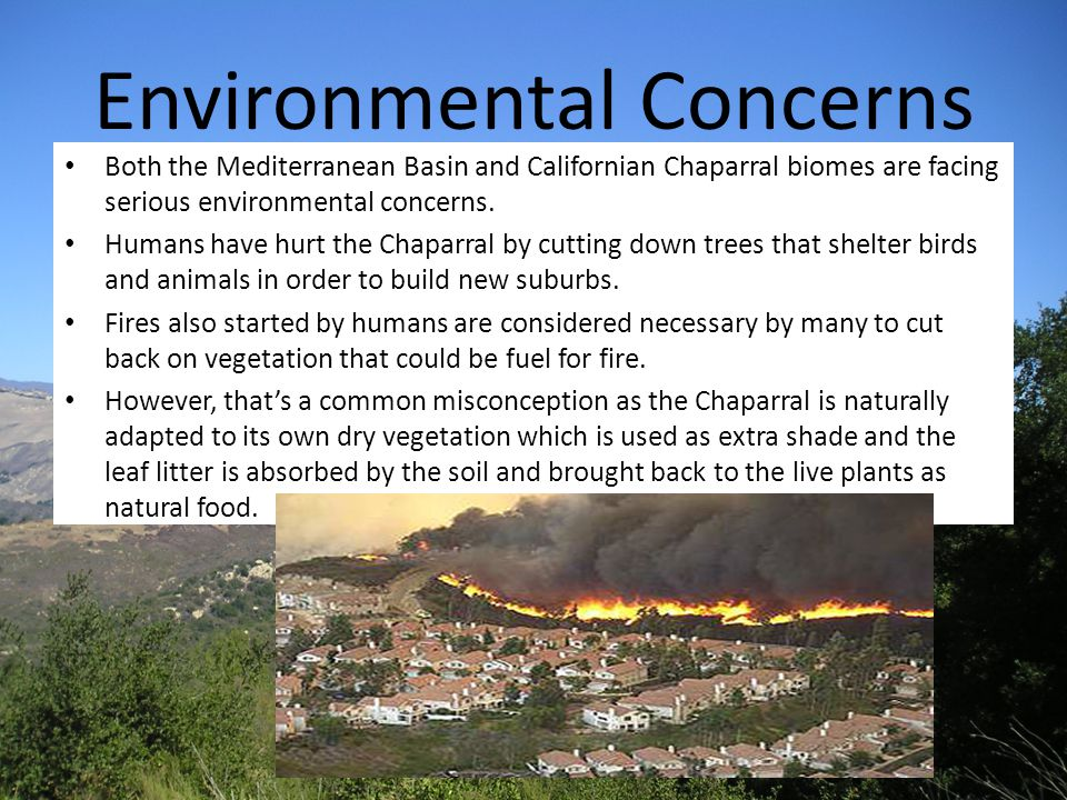 Environmental Concerns Another false argument for controlled fires is to rid backyards of ugly shrubs. Many of these homes have been built upon Chaparral which has existed perfectly without the help of controlled fires.