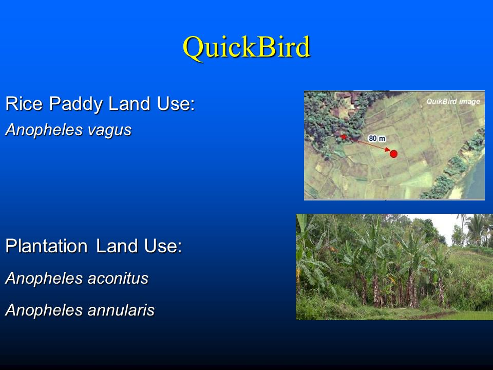 QuickBird Rice Paddy Land Use: Anopheles vagus Plantation Land Use: Anopheles aconitus Anopheles annularis