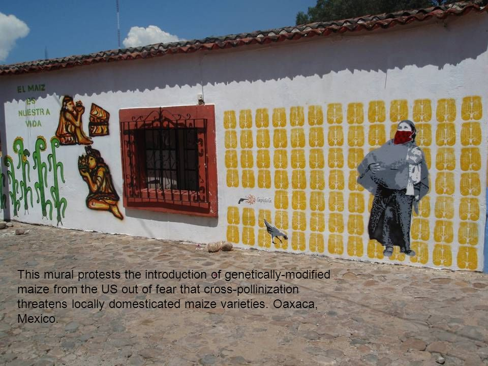 This mural protests the introduction of genetically-modified maize from the US out of fear that cross-pollinization threatens locally domesticated maize varieties.