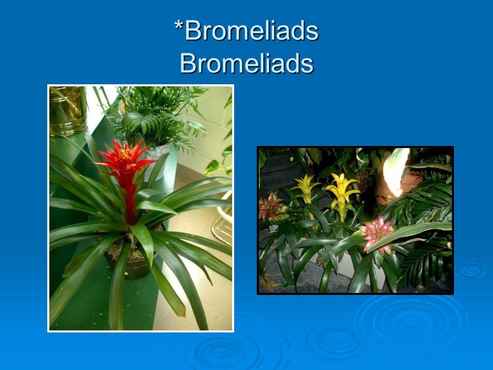 *Bromeliads Bromeliads