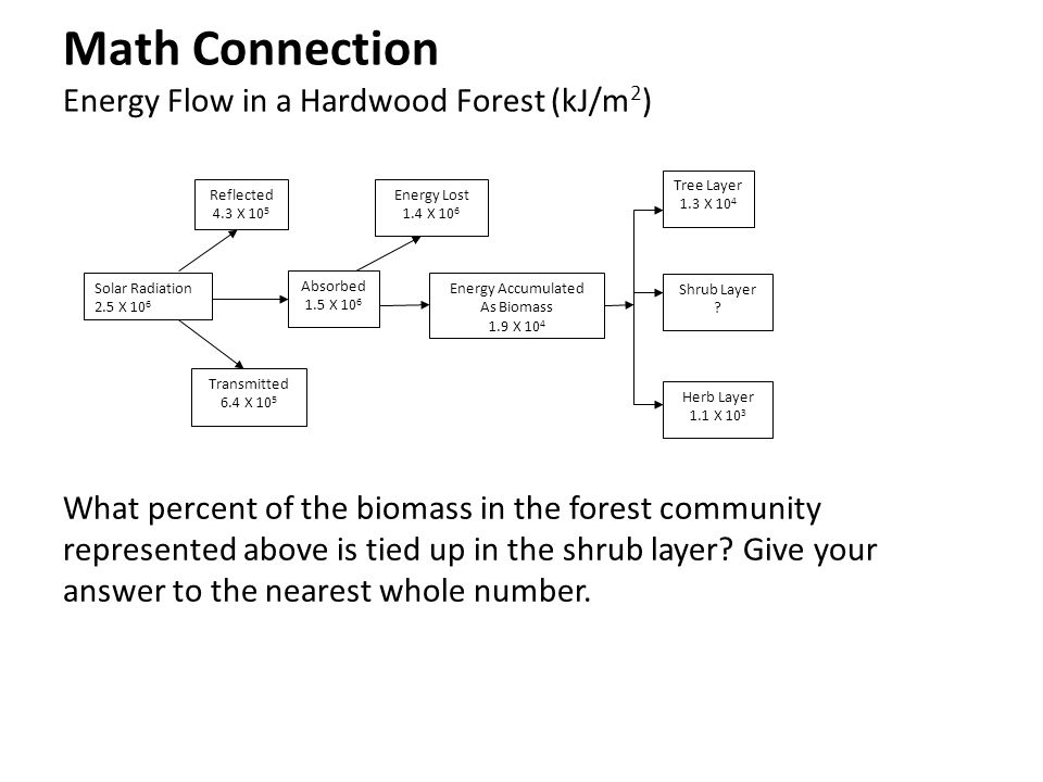 Math Connection Energy Flow in a Hardwood Forest (kJ/m 2 ) What percent of the biomass in the forest community represented above is tied up in the shr