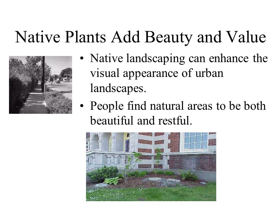 Native Plants Add Beauty and Value Native landscaping can enhance the visual appearance of urban landscapes.