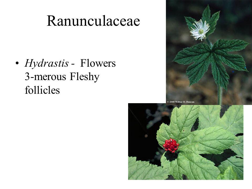 Ranunculaceae Hydrastis - Flowers 3-merous Fleshy follicles
