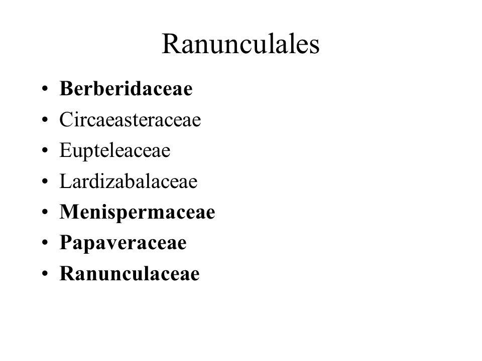 Ranunculales Berberidaceae Circaeasteraceae Eupteleaceae Lardizabalaceae Menispermaceae Papaveraceae Ranunculaceae