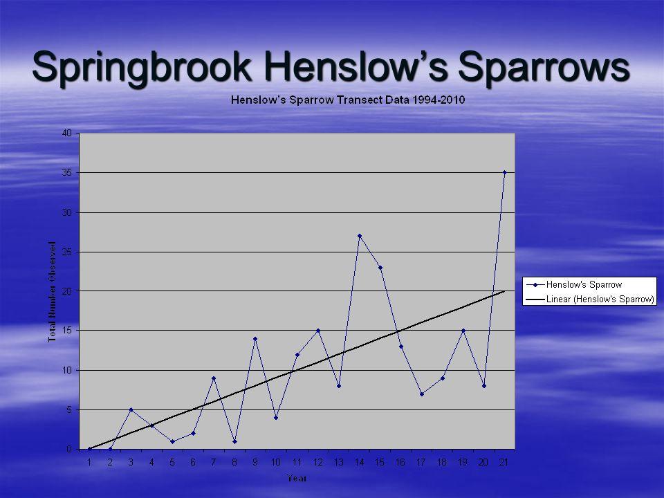 Springbrook Henslow's Sparrows