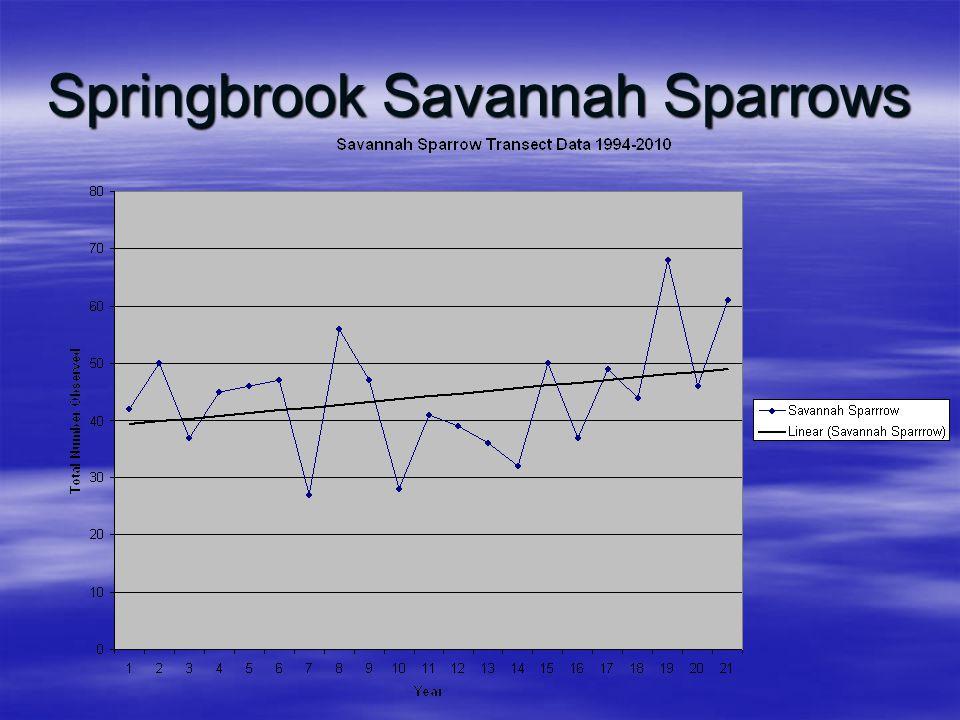 Springbrook Savannah Sparrows