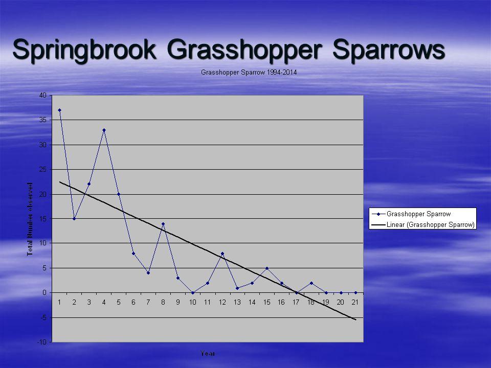 Springbrook Grasshopper Sparrows