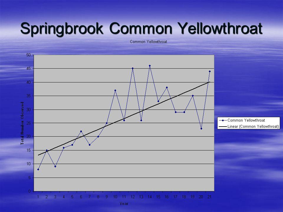 Springbrook Common Yellowthroat