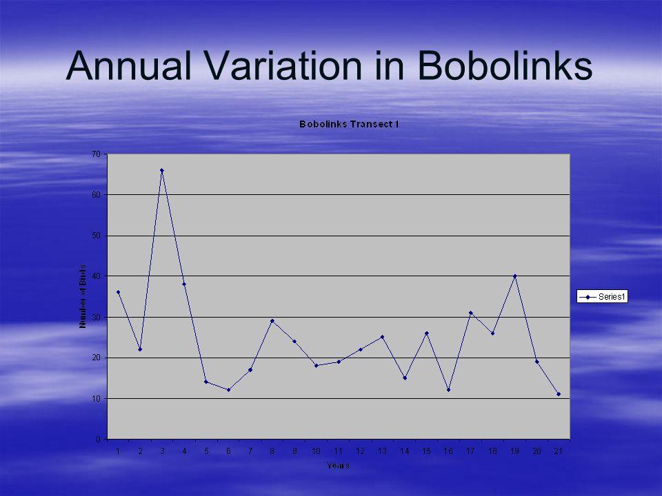 Annual Variation in Bobolinks