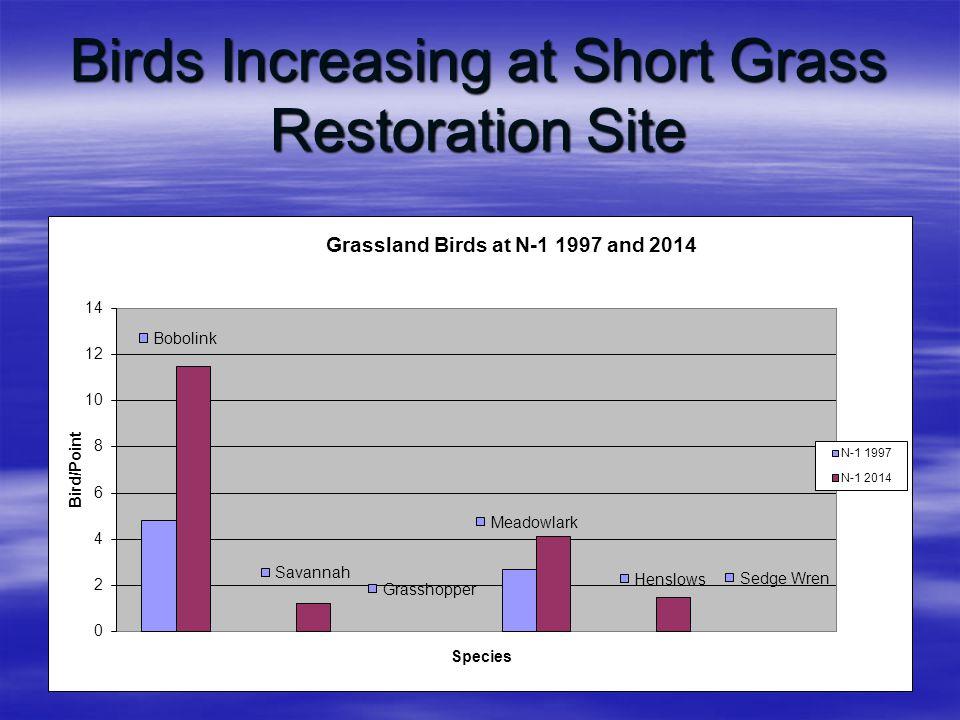 Birds Increasing at Short Grass Restoration Site
