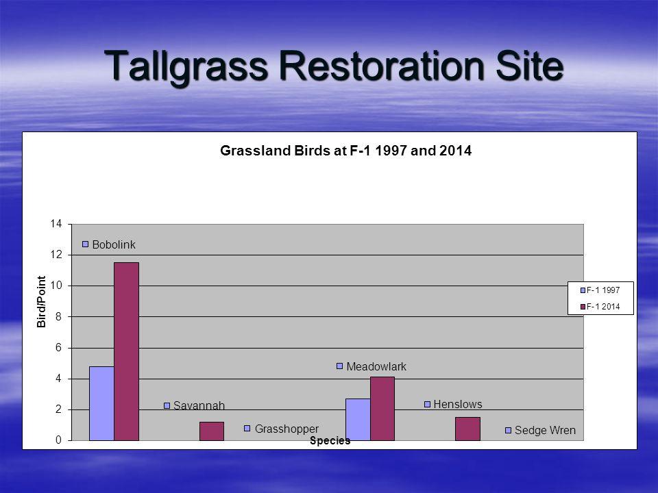Tallgrass Restoration Site