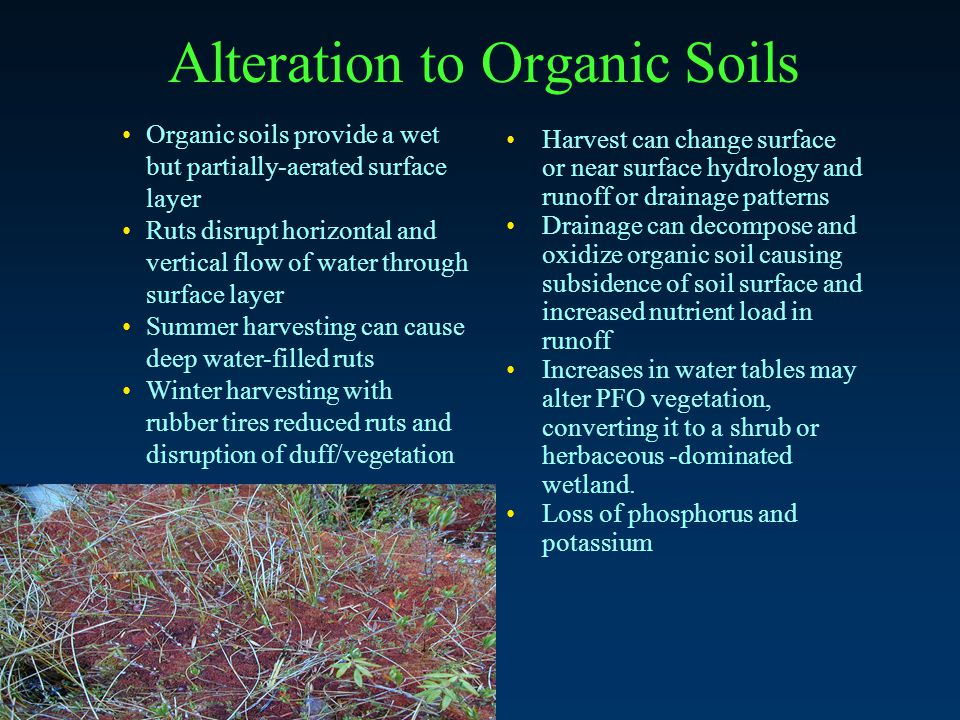 Alteration to Organic Soils Organic soils provide a wet but partially-aerated surface layer Ruts disrupt horizontal and vertical flow of water through surface layer Summer harvesting can cause deep water-filled ruts Winter harvesting with rubber tires reduced ruts and disruption of duff/vegetation Harvest can change surface or near surface hydrology and runoff or drainage patterns Drainage can decompose and oxidize organic soil causing subsidence of soil surface and increased nutrient load in runoff Increases in water tables may alter PFO vegetation, converting it to a shrub or herbaceous -dominated wetland.