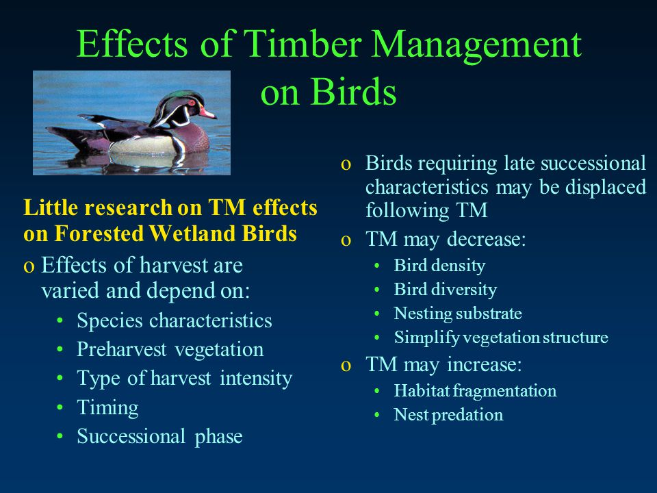 Effects of Timber Management on Birds Little research on TM effects on Forested Wetland Birds o Effects of harvest are varied and depend on: Species characteristics Preharvest vegetation Type of harvest intensity Timing Successional phase oBirds requiring late successional characteristics may be displaced following TM oTM may decrease: Bird density Bird diversity Nesting substrate Simplify vegetation structure oTM may increase: Habitat fragmentation Nest predation