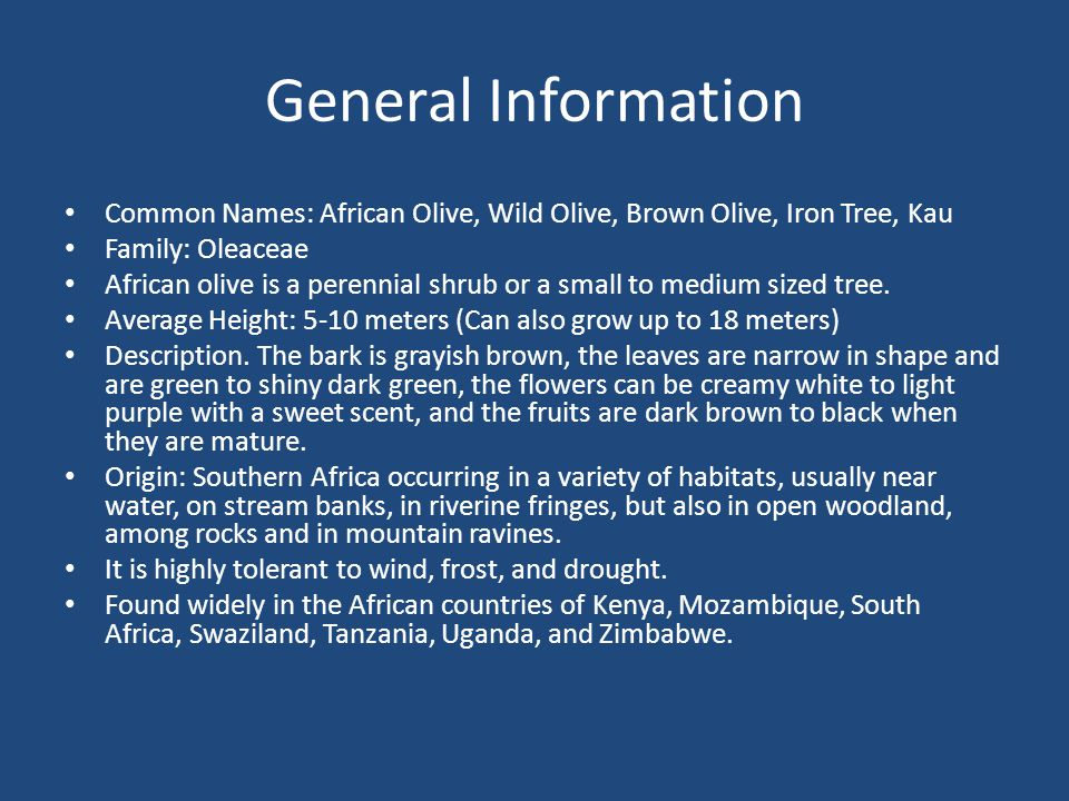 General Information Common Names: African Olive, Wild Olive, Brown Olive, Iron Tree, Kau Family: Oleaceae African olive is a perennial shrub or a small to medium sized tree.