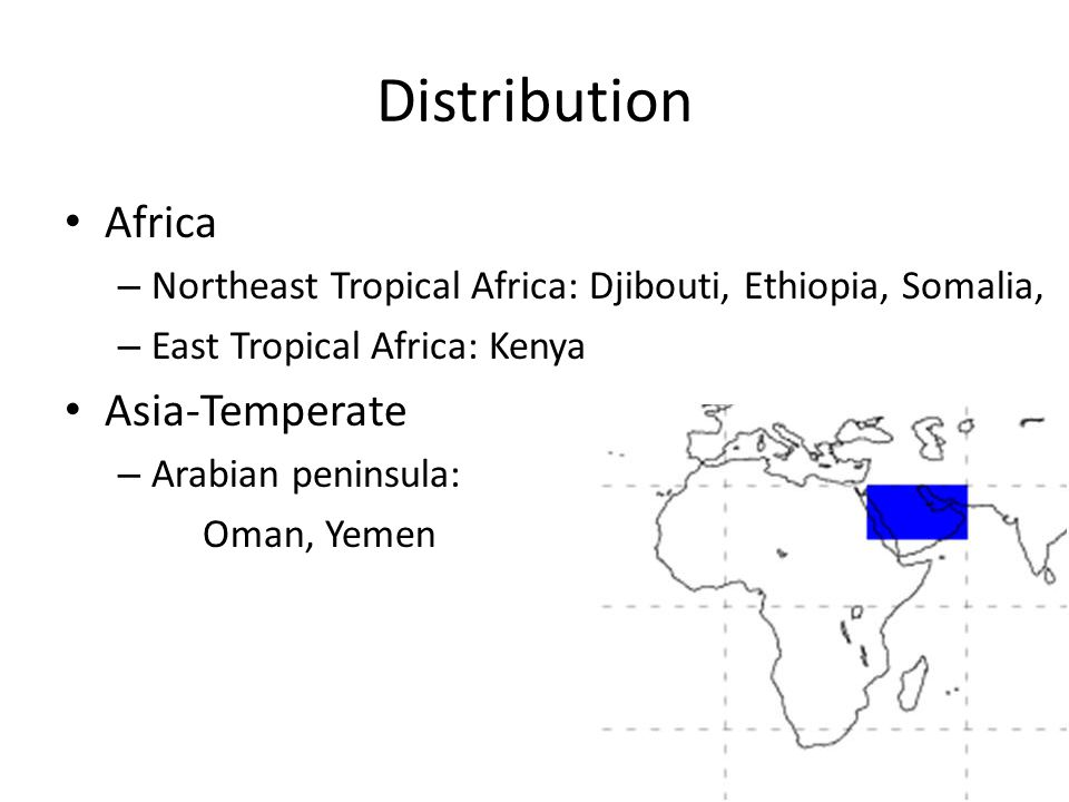 Distribution Africa – Northeast Tropical Africa: Djibouti, Ethiopia, Somalia, – East Tropical Africa: Kenya Asia-Temperate – Arabian peninsula: Oman, Yemen