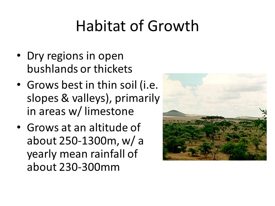 Habitat of Growth Dry regions in open bushlands or thickets Grows best in thin soil (i.e.