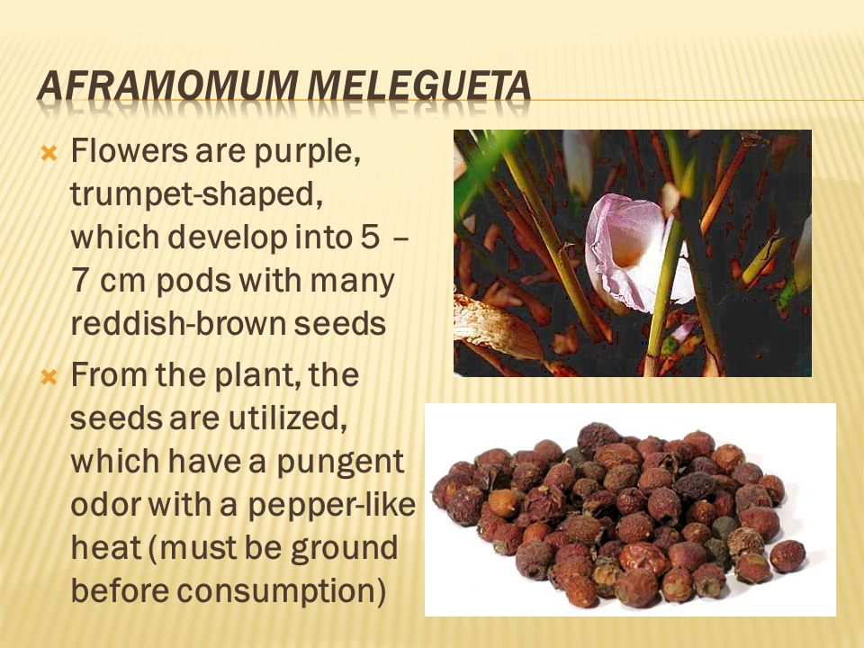  Flowers are purple, trumpet-shaped, which develop into 5 – 7 cm pods with many reddish-brown seeds  From the plant, the seeds are utilized, which have a pungent odor with a pepper-like heat (must be ground before consumption)